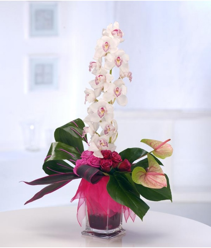 Orchid Surprise